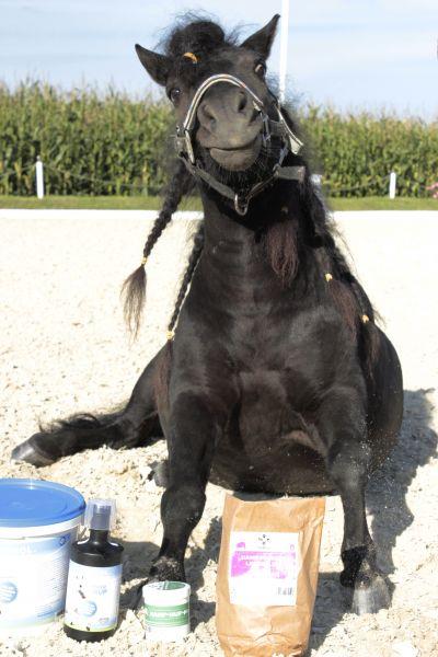 Pferde Hanf Leckerlis